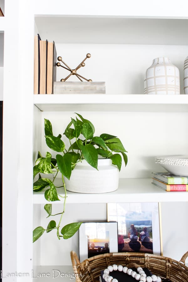 Indoor house plants you can't kill