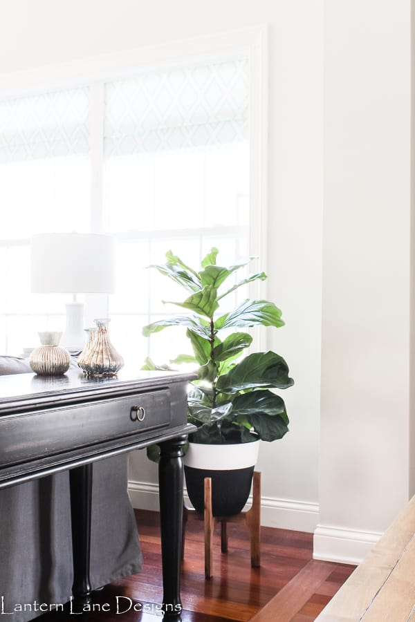 Easy House Plants To Take Care Of