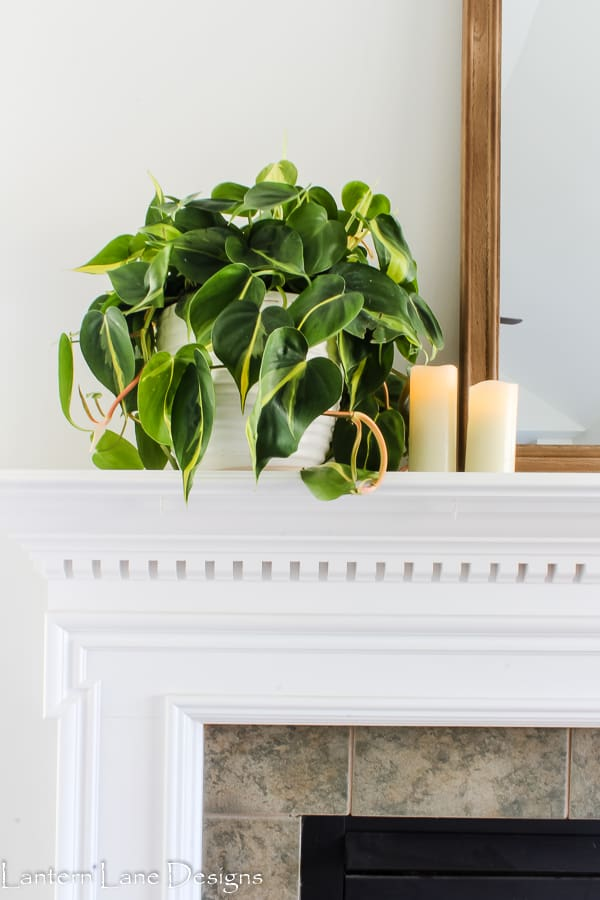 The best indoor house plants
