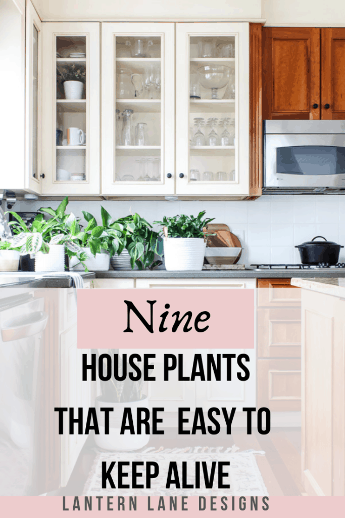 Easy house plants