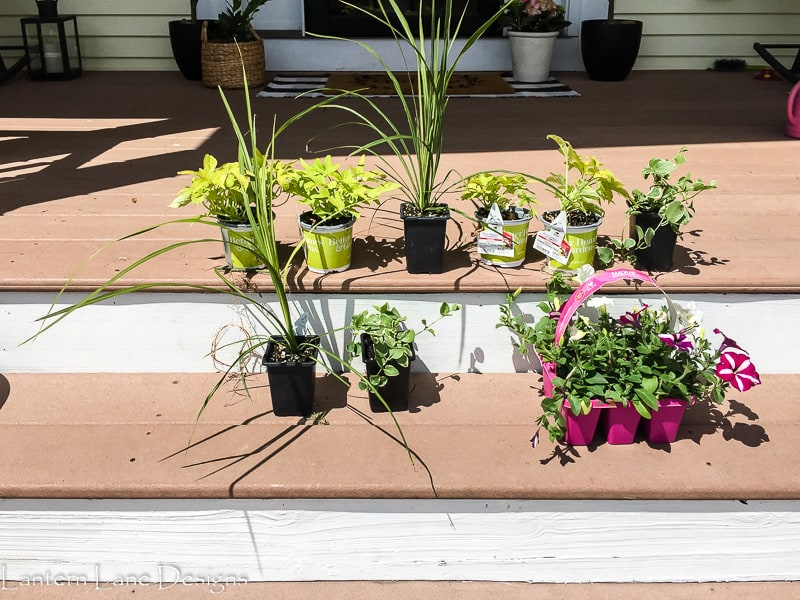 plants for planters