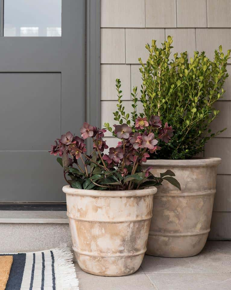 Planter Ideas For Front Porch