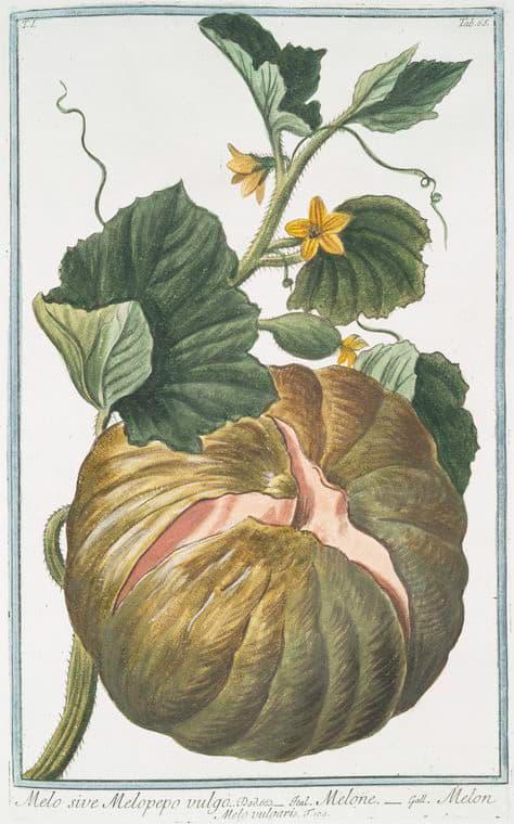 Fall free botanicals