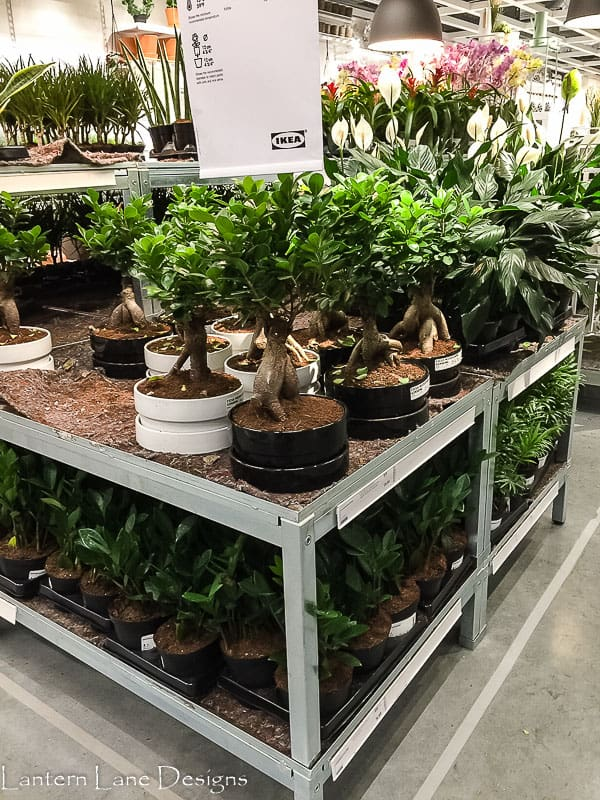 Plants at IKEA